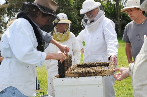 BEE BREEDER-GENETICIST Susan Cobey (left) shows a hive to the students in her queen bee-rearing class. (Photo by Kathy Keatley Garvey)
