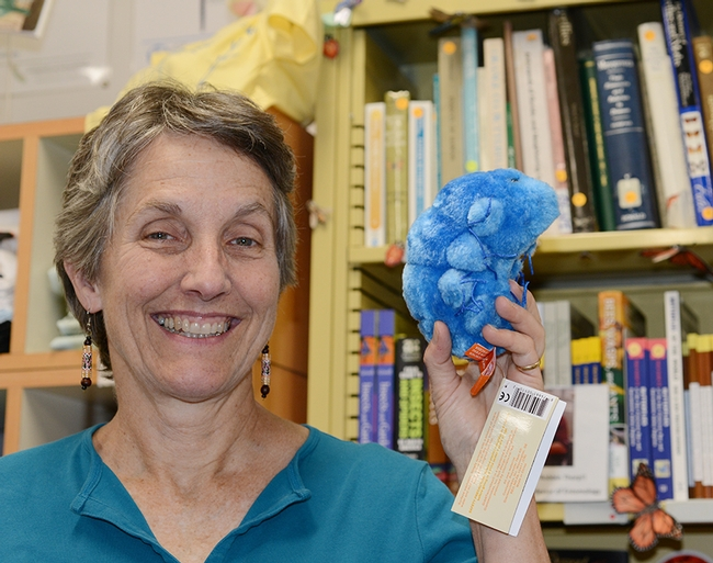 Lynn Kimsey, director of the Bohart Museum of Entomology, shows a stuffed animal, a tardigrade, available in the Bohart Museum gift shop. (Photo by Kathy Keatley Garvey)