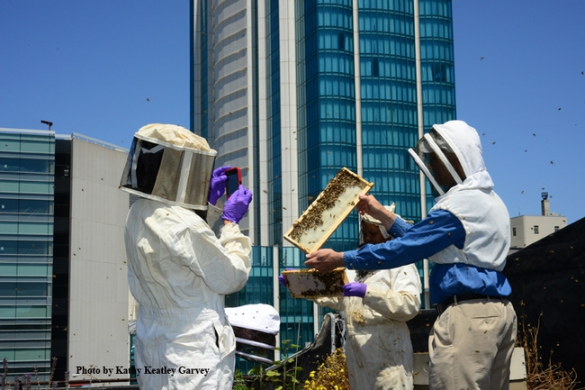 Rooftop beekeeping! Extension apiculturist Eric Mussen (right, now emeritus) holds up a frame for a photograph. This photo was taken on the rooftop of the San Francisco Chronicle. (Photo by Kathy Keatley Garvey)
