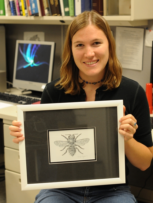 EMILY BZDYK created this pen-and-ink drawing of a leafcutter bee. (Photo by Kathy Keatley Garvey)