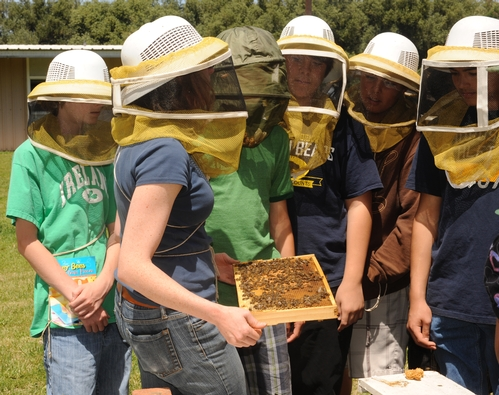 BEEKEEPER Elizabeth Frost shows a frame to students at the Antioch Charter Academy, a middle school in Contra Costa County. (Photo by Kathy Keatley Garvey)