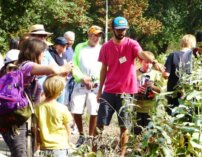 Entomologist Joel Hernandez leads a 2015 butterfly tour at the UC Davis Arboretum. He'll conduct another tour at 10 a.m., Sunday, Sept. 18 at the UC Davis Arboretum. (Photo by Elaine Fingerett, UC Davis Arboretum)