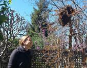 Beekeeper Ann M. Evans admires her first swarm (2013).