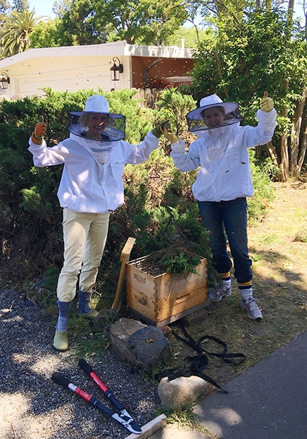 Ann Evans (right) with Jamie Buffington, after catching a swarm in East Davis in spring 2015. They had just caught the swarm, when another showed up (see the bees flying behind them). It landed in the juniper bush behind them, and they caught it, each going home with new bees.