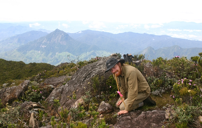 Ant specialist Marek Borowiec collecting ants at the summit of Mt Marojejy in northern Madagascar. (Photo by Kimiora Ward)
