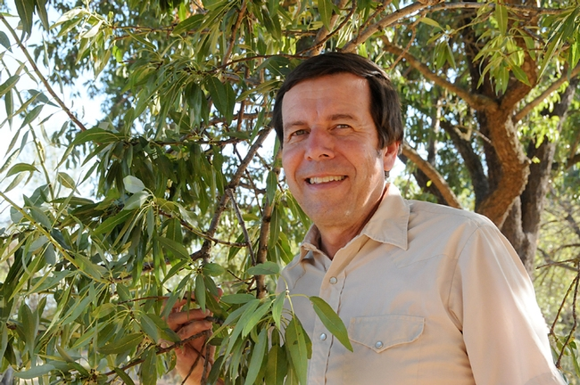 Integrated pest management specialist Frank Zalom, UC Davis distinguished professor, by an almond tree. (Photo by Kathy Keatley Garvey)