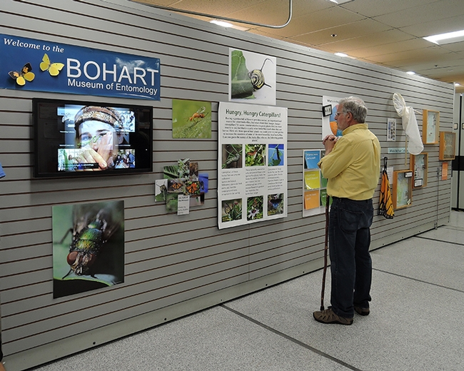 A visitor stops to read a poster at the close of the Bohart Museum open house.