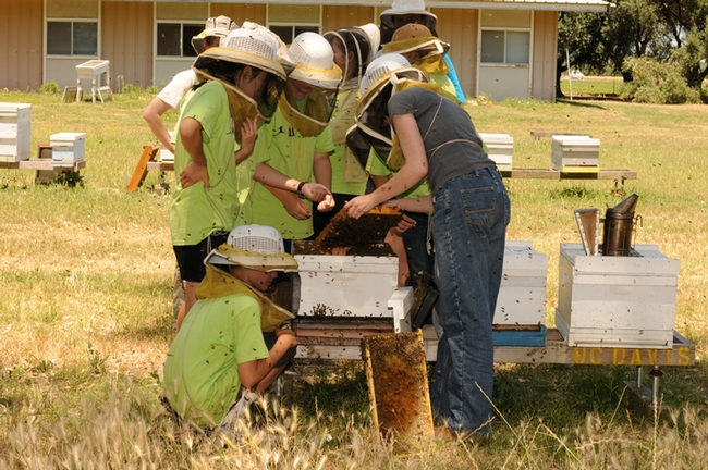 The 2011 UC Davis Bio Boot Camp featured a tour of the Harry H. Laidlaw Jr. Honey Bee Research Facility on Bee Biology Road. Here the campers crowd around beekeeper Elizabeth Frost as she opens the hive. Frost is now the education officer for honey bees at the Department of Primary Industries, New South Wales. (Photo by Kathy Keatley Garvey)