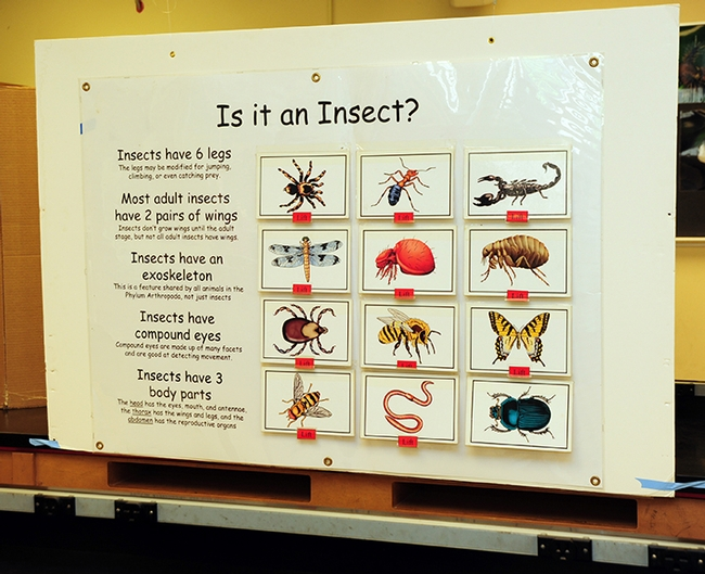 A popular attraction at Briggs Hall is this dispay: Is it an Insect? (Photo by Kathy Keatley Garvey)