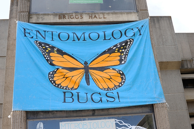 A colorful banner fronts Briggs Hall, home of the UC Davis Department of Entomology and Nematology. (Photo by Kathy Keatley Garvey)