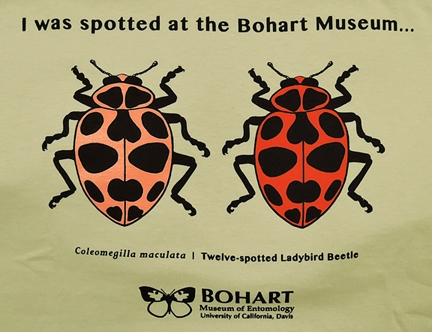 Spot on: The Bohart Museum of Entomology t-shirt adorned with the 12-spotted lady beetle, also known as the pink-spotted lady beetle. (Photo by Kathy Keatley Garvey)