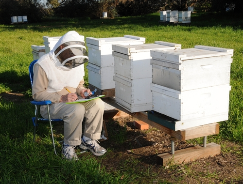ERIC MUSSEN, shown here at the UC Davis apiary, is a noted expert on honeybees and their health. He writes the bimonthly newsletter,