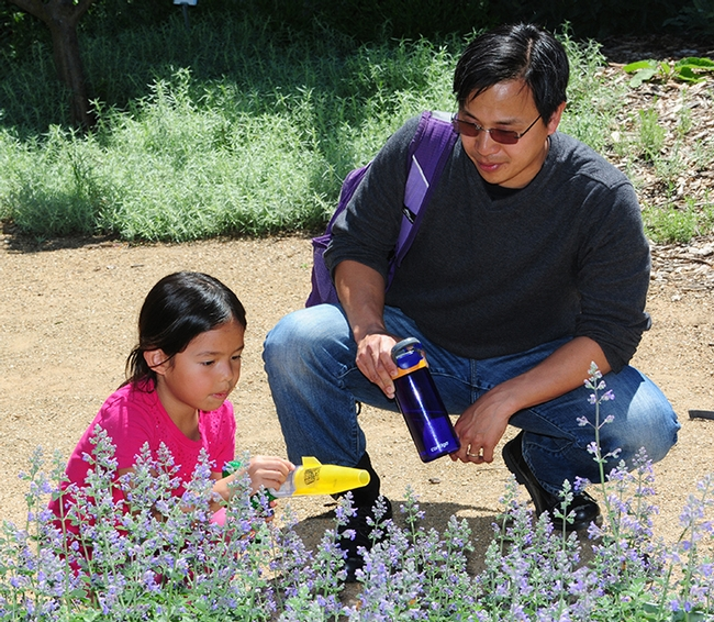 Chloe Jerng, 8, gets ready to use a catch-and-release device in the haven with her dad, Mark Jerng,  an English professor.