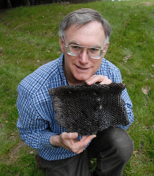 EXTENSION APICULTURIST Eric Mussen shows a frame from a bee-abandoned hive in Yolo County. The symptoms appear to reflect colony collapse disorder (CCD), the mysterious disease characterized by adult bees abandoning the hive, leaving behind the queen bee and stored food. (Photo by Kathy Keately Garvey)