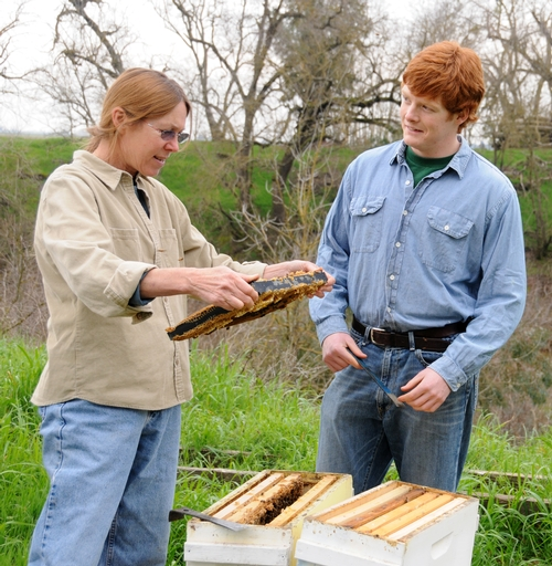 SUSAN COBEY, bee breeder-geneticist at the Harry H. Laidlaw Jr. Honey Bee Research Facility at UC Davis, tends her bees with beekeeper-employee Tylan Selby, an entomology major at UC Davis. Selby's family  members are commercial beekeepers in the Chico area.  (Photo by Kathy Keatley Garvey)