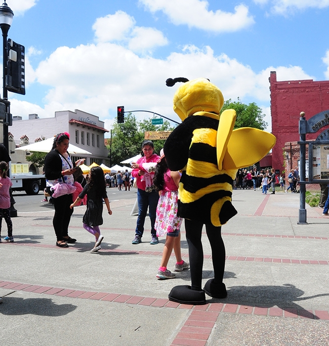 This honey bee buzzed the California Honey Festival. (Photo by Kathy Keatley Garvey)