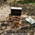 This is what bear damage to a hive looks like.  This photo was provided by Jackie Park-Burris of Palo Cedro, who owns Jackie Park-Burris Queens. (Photo courtesy of Jackie-Park Burris)