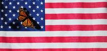 Two icons: the American flag, which represents our democracy, and the monarch butterfly, which is linked to a monarchy. The common name,
