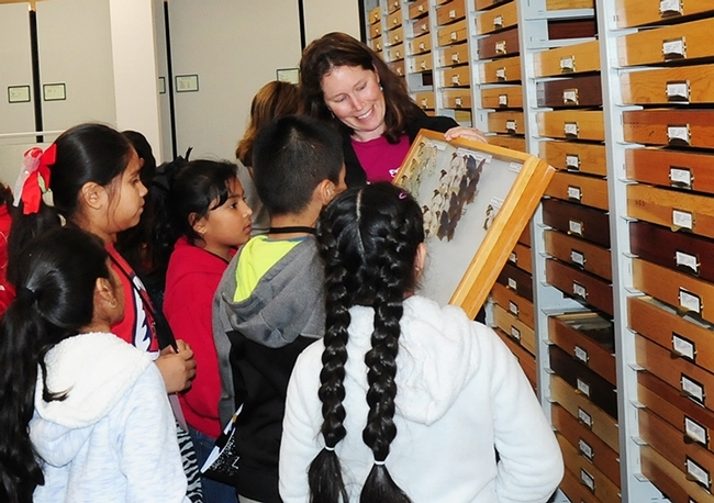 Tabatha Yang, education and outreach coordinator at the Bohart Museum of Entomology, shows butterfly specimens to a group of students. She received a Citation for Excellence from the UC Davis Staff Assembly for outstanding contributions. (Photos by Kathy Keatley Garvey) for Bug Squad Blog
