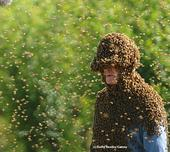 'Bee Man' Norm Gary is surrounded by bees as he is about to perform a bee wrangling stunt. He is now retired from bee wrangling. (Photo by Kathy Keatley Garvey)