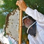 Les Crowder examines a frame from his top-bar hive. A resident of Austin, Texas, he will speak Sept. 7 at the Western Apicultural Society conference at UC Davis.