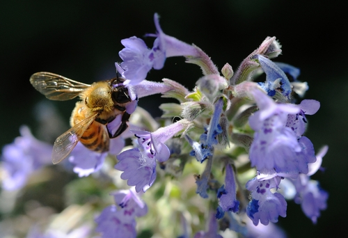 Nectaring