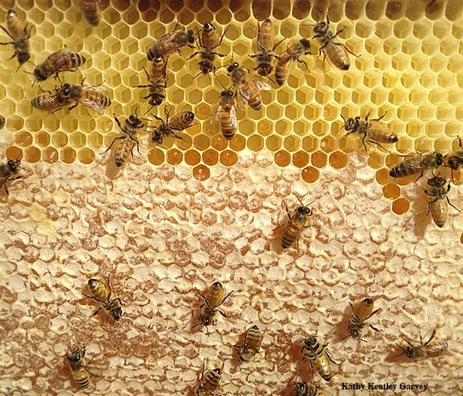 Honeycomb: