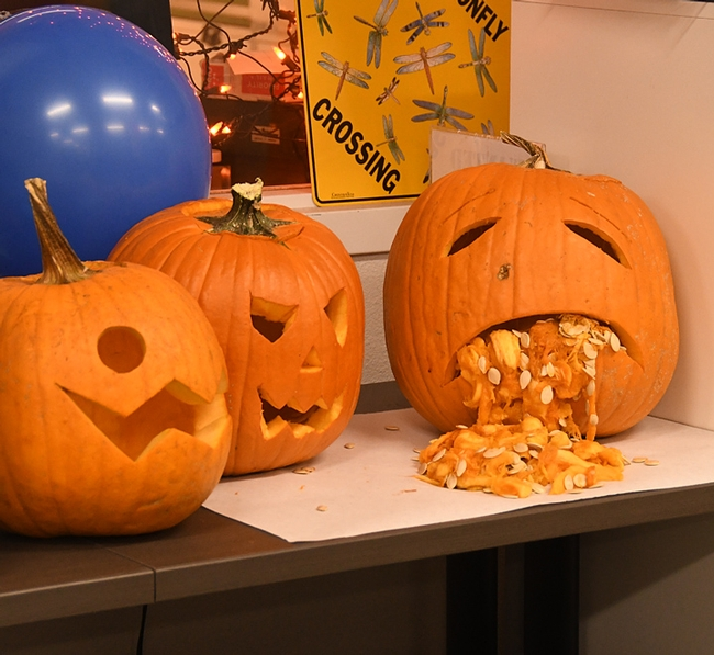 A carved pumpkin at the Bohart Museum of Entomology's Halloween party spilled its guts. (Photo by Kathy Keatley Garvey)