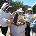 Extension apiculturist Elina Lastro Niño conducts a beekeeping class at the Harry H. Laidlaw Jr. Honey Bee Research Facility, UC Davis. (Photo by Kathy Keatley Garvey)