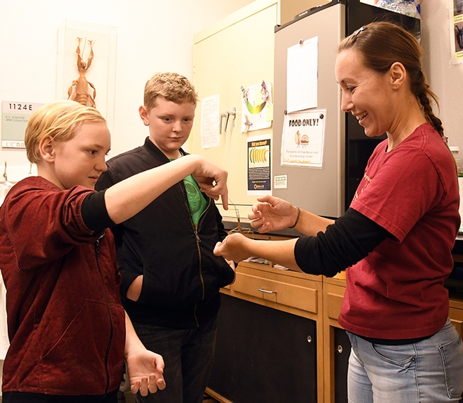 UC Davis doctoral candidate Jessica Gillung shows a stick insect to brothers Elliott Bren, 12 (foreground) and Liam Breen, 14. (Photo by Kathy Keatley Garvey)