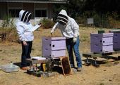 Elina Lastro Niño (left) tests a prospective graduate of the California Master Beekeeper Program. (Photo by Kathy Keatley Garvey)