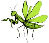 This stunning praying mantis illustration is the work of Ivana Li, UC Davis entomologist and artist. It  will be among the art displayed at the Bohart Museum of Entomology's open house on Jan. 21.