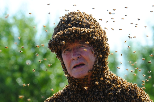 Bee Man Norman Gary