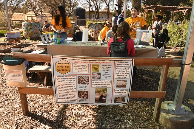 Visitors enjoy making seed balls for the bees, one of the featured activities at the Häagen-Dazs Honey Bee Haven last Saturday. (Photo by Kathy Keatley Garvey)