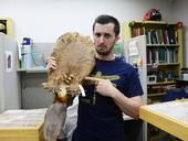 Entomology student and Bohart Museum associate Wade Spencer grimaces for the camera as he holds a beaver pelt and points to where a parasite lives. (Photo by Kathy Keatley Garvey)