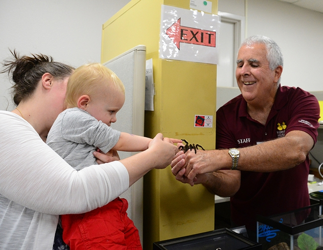 Two-year-old Teddy Owens of Davis, held by his mother, Dina Owens, high-fives Snuggles, the rose-haired tarantula, held by entomologist and Bohart associate Jeff Smith. (Photo by Kathy Keatley Garvey)