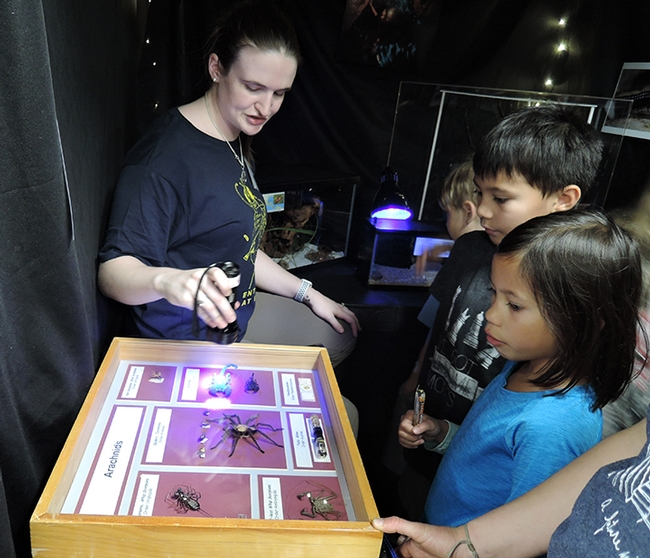UC Davis entomology doctoral candidate Charlotte Herbert shows youngsters how scorpions fluoresce under ultraviolet light. (Photo by Kathy Keatley Garvey)