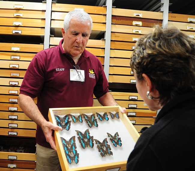 Entomologist Jeff Smith, curator of the butterfly and moth specimens at the Bohart Museum of Entomology, enjoys showing  insects. (Photo by Kathy Keatley Garvey)
