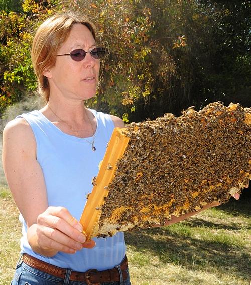 Bee breeder-geneticist