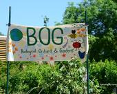 The Biological Orchard and Gardens (BOG) sign features floral and insect designs. It's located by the Mann Laboratory, UC Davis campus. (Photo by Kathy Keatley Garvey)