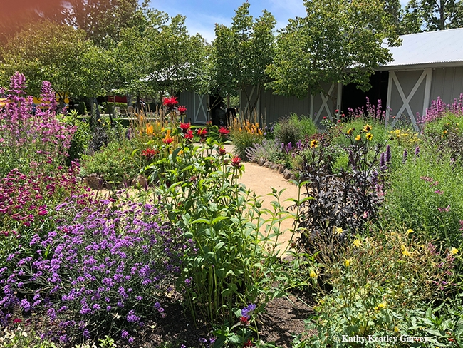 This is an overview of part of Kate Frey's pollinator garden at Sonoma Cornerstone. (Photo by Kathy Keatley Garvey)