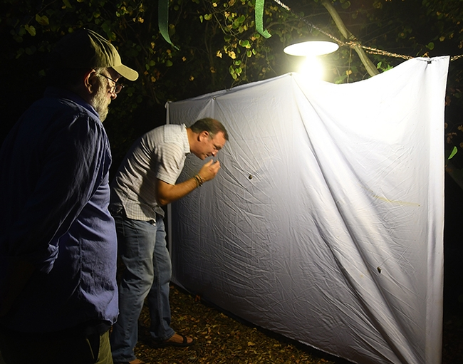 UC Davis Department of Entomology and Nematology professor Jason Bond examines a scarab beetle at the blacklighting display set up during Moth Night. Bond, a new member of the faculty, is professor of entomology and the Evert and Marion Schlinger Endowed Chair in insect systematics. At left is