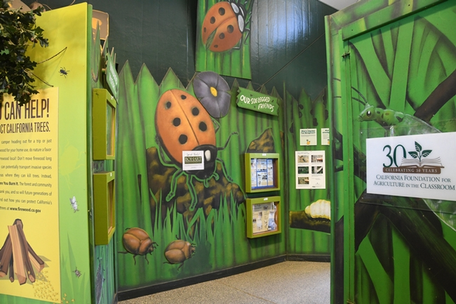 The California State Fair's Insect Pavilion lauded the Bohart Museum of Entomology for donating insect specimens. (Photo by Kathy Keatley Garvey)