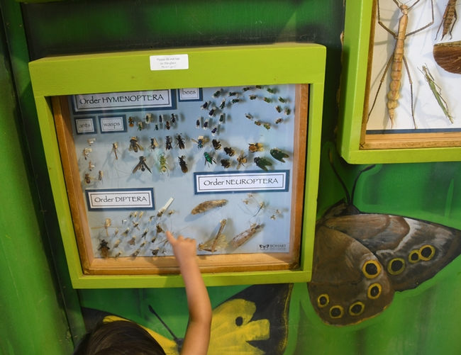 A youngster points excitedly at a display in the Insect Pavilion. (Photo by Kathy Keatley Garvey)
