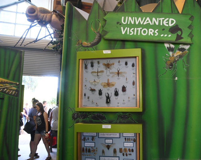 The wanted visitors at the California State Fair and the unwanted visitors (pests). (Photo by Kathy Keatley Garvey)
