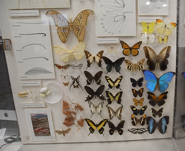 The Bohart Museum of Entomology houses some 8 million insect specimens. (Photo by Kathy Keatley Garvey)