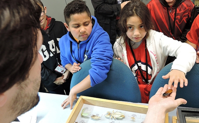 Children of California migratory workers react to a Madagascar hissing cockroach during their tour of the Bohart Museum of Entomology. A news story about the event won a gold or first-place award in the ACE competition. (Photo by Kathy Keatley Garvey)