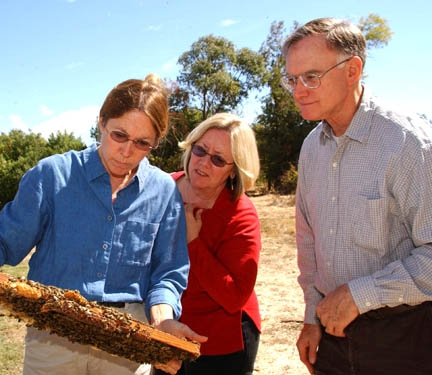 UC Davis bee breeder-geneticist Susan Cobey (far left) and UC Davis apiculturist Eric Mussen look at a bee frame with beekeeper Valerie Severson of Yuba City. (Photo by Kathy Keatley Garvey)