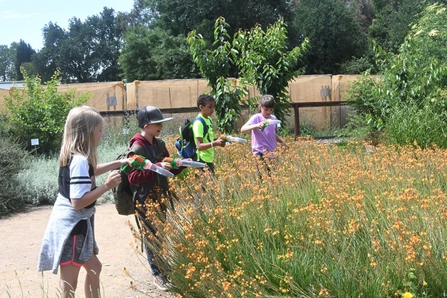 This catch-and-release activity is especially popular among children in the Häagen-Dazs Honey Bee Haven. They catch, examine and release bees, including honey bees, bumble bees and carpenter bees. (Photo by Kathy Keatley Garvey)