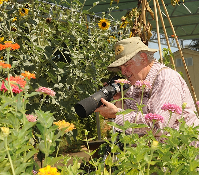 Photographer Allan Jones of Davis focuses his camera on insects in the Häagen-Dazs Honey Bee Haven. (Photo by Kathy Keatley Garvey)